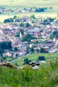 View of Asiago from the meadows (ph: Roberto Costa Ebech).